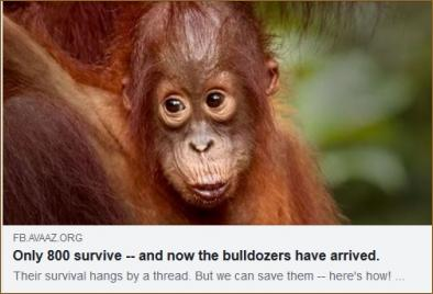https://secure.avaaz.org/campaign/en/save_the_tapanuli_orangutans_51/?fRSeBab&fbogname=Jennifer